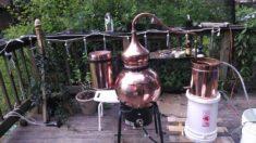Rosa Rugosa Distillation
